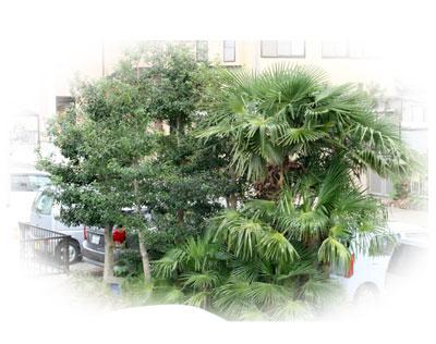 ハトの巣があると思しき木