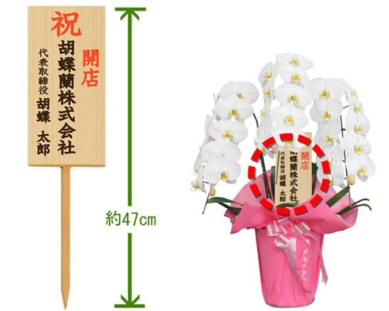 胡蝶蘭の高級感をより引き立てたいのなら、木札(タテ)をおすすめします