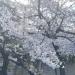 Coming Soon! 待望の青山・渋谷に松装ショールームOPEN!